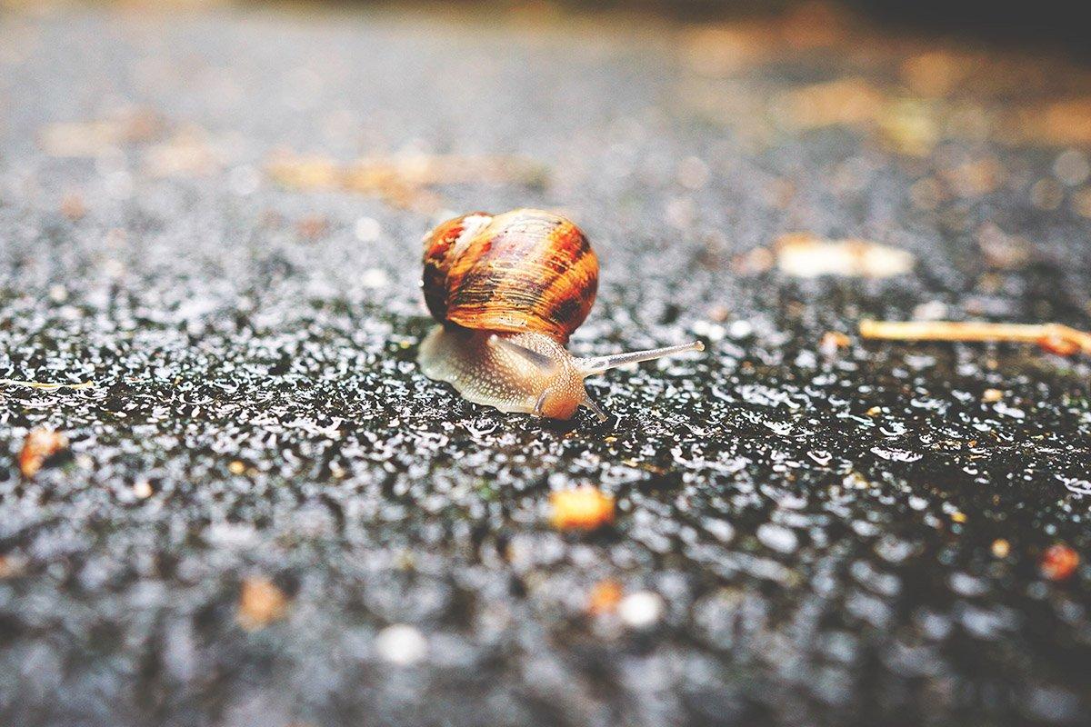 Snail on raod